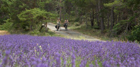 La Provenza en bicicleta