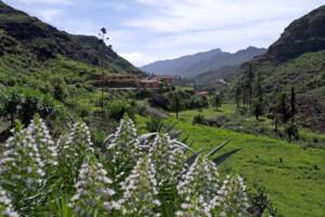 Naturaleza Gran Canaria